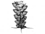 Исследование древнего зоопланктона открыло новую версию