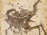 Учёные нашли причину искривления скелета динозавров