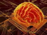 Учёные смогли разгадать загадку кодирования памяти