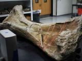 Палеонтологи создают копию самого крупного динозавра