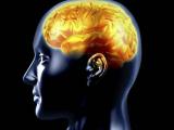 Белок FKBP52 поможет в лечении болезни Альцгеймера