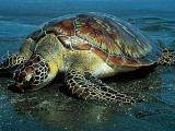 Учёных беспокоят химические загрязнения в морях Европы