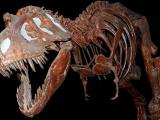 Раскрыта улыбка самого грозного хищника Тиранозавра