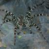 Учёные объяснили, почему пауки не прилипают к паутине