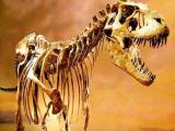 Учёные выяснили, вымершие динозавры столкнулись с огнём