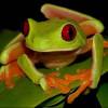Самки играют важную роль в выживании и разнообразии видов
