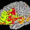 Исследователи определили место нахождения интеллекта