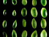 Учёные выявили, что малые РНК отвечают за размер семян