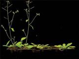 Учёными найден ген, способствующий цветению растений