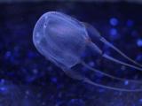 В прибрежной экосистеме наблюдается увеличение численности медуз