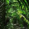 Африканские пальмы рассказывают об изменении климата