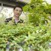 Лучшие растения для производства биотоплива следующего поколения