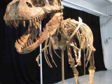 Скелет тиранозавра выставлен на продажу, но под сомнение поставлено право собственности
