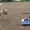 Go-Go Dog Pals: игрушки с дистанционным управлением, предназначенные для тренировки вашей собаки.