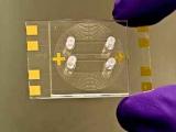 Ученые создали дешевый и быстрый тестер на туберкулез