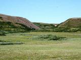 Кустарники тундры становятся деревьями-температура в Арктике повышается