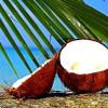 Кокосовое масло заслужило свою репутацию как самое здоровое масло в мире
