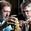 Новый искусственный спинной диск предназначен для лечения хронических болей в пояснице