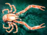 Новый вид ракообразных обнаружен у берегов Испании