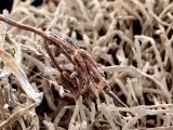 Грибок-симбионт помогает растению поедать насекомых