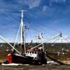 Ученые бьют тревогу – мировые запасы рыбы могут сократиться на 90%
