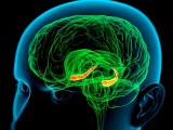 Ученые:память помогает человеку учиться