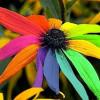 Современная наука подтверждает влияние свето и цветотерапии на укрепление здоровья