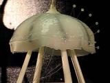 Ученые собрали медузу из силикона и мускульных клеток сердца