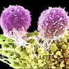 Бессмертны ли раковые клетки