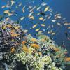Ученые обнаружили рак кожи у рыб