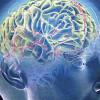 Мозг больного шизофренией регенерирует поврежденные участки