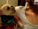 Говорящий щенок покорил Интернет