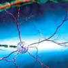 Ученые определили, как мозгу удается избавляться от метаболического «мусора»