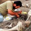 Палеонтологи из Франции открыли новый вид динозавра, обитавшего на Земле 75 млн лет назад