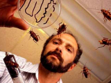 Ученые создали робота-насекомого