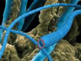 Бактерии на дне моря создают силовой кабель