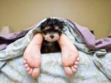 Собаки могут помочь бороться с врожденной сонливостью
