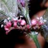 Ботаники описали новые виды зеленых растений из пещер