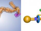 Крохотное приспособление позволит искусственно создавать протеины