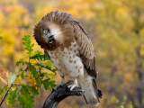 Ученые изучили поворот головы сов