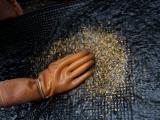 Ученые обнаружили бактерии, способные создавать золото