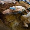 Следы динозавров были найдены на заднем дворе у NASA