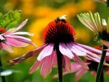 Пчелы и цветы общаются при помощи электрических полей