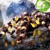 Шри-Ланка подарила ученым новый вид пауков
