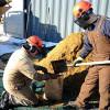 Ученые изучают конский навоз для создания биотоплива