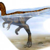 Ученые выяснили, как плавали сухопутные динозавры