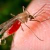 Ученые нашли устойчивые к лекарствам возбудители малярии