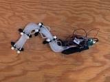 Ученые создали пневматического гибкого робота-змею