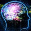 Новый проект BRAIN планирует разработку искусственного мозга