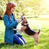 Собаки способны оздоровить людей